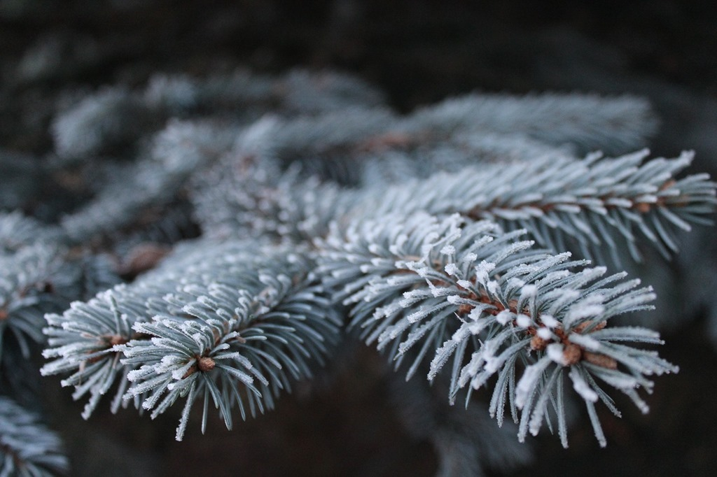 frost-1793866_1280